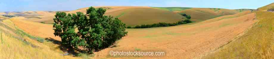 Photo of Tree and Wheatfields